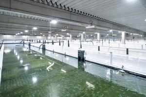 """<div class=""""bildtext_1"""">Die Aufzuchtanlage der Swiss Shrimp AG hat insgesamt 16 Becken mit je 100 m³ Wasservolumen. Die Aufzucht hat eine Kapazität von bis zu 60 t Shrimps im Jahr.</div>"""