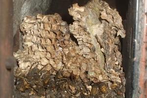 Insektennester<br />Wespen, Bienen und Hornissen nutzen auch Schornsteine zum Nestbau<br />