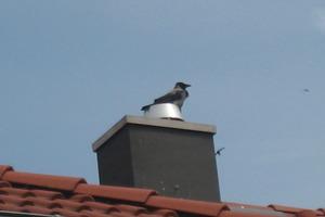 """<div class=""""bildunterschrift_ueberschrift"""">Aussichtspunkt<br />Lebende Vögel nutzen Schornsteine gerne als Aussichtspunkt - die Abgase werden ihnen aber manchmal zum Verhängnis</div>"""